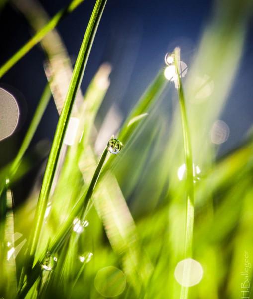 Gras nach Regen