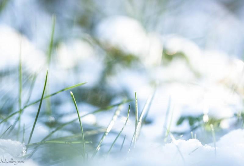schnee auf Gras