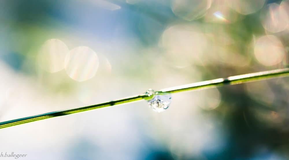 frost auf gras