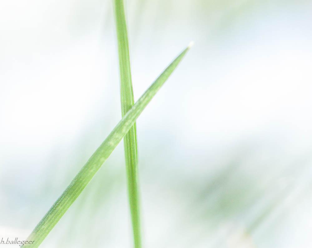 Gras und Schnee