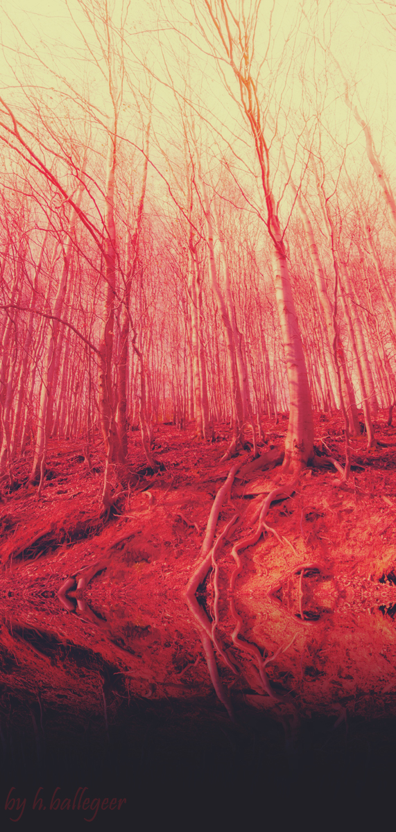 bloody_forest