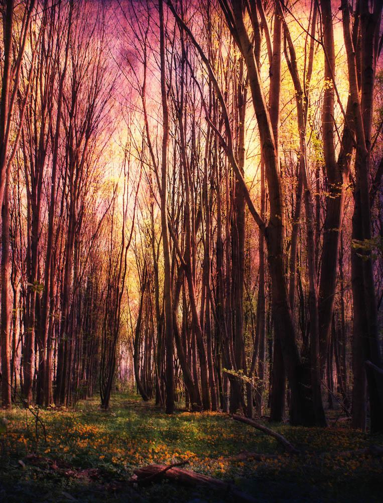 Bäume im Wald mit Texturen bearbeitet