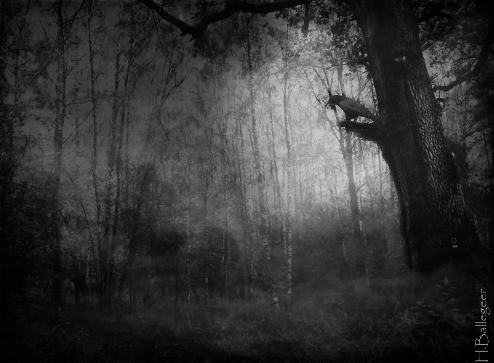 rabe in nebeligem Wald