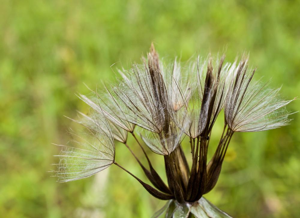 verblühte Pflanze